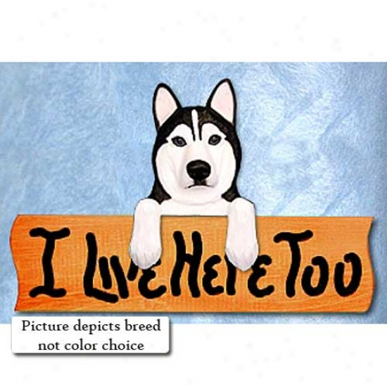 Siberian Husky I Live Here Too Maple Finish Sign Grey And Whute