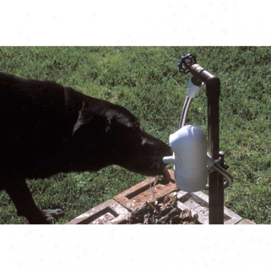 Sprinkle and calender  Dog Automatic Outdoor Pet Drinking Fountain