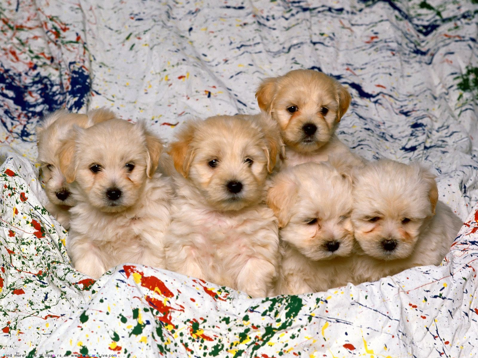 The Free Little Cute Dog S Puppies Desktop Wallpaper Pictures For Pc Mac 36