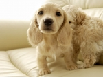 The Free Little cute Dog's Puppies desktop wallpaper pictures for PC & Mac